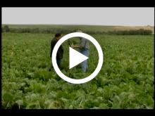 A look at the many reasons that southern Alberta is an ideal location for growing sugar beets.